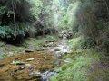 Waikouiti River South Branch