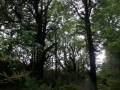Red beech forest