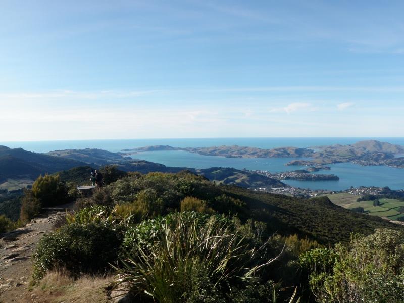 Otago Harbour 3