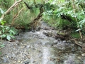 Gunn's stream