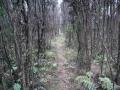 Rosella-Ridge-track