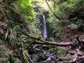 Nicholls Falls