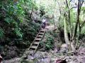 waterfall-bush