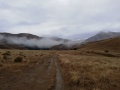 Open Tussock and well formed track